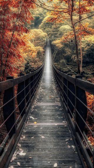 Обои на телефон путь, красота, природа, осень, мост, лес, классные, вид
