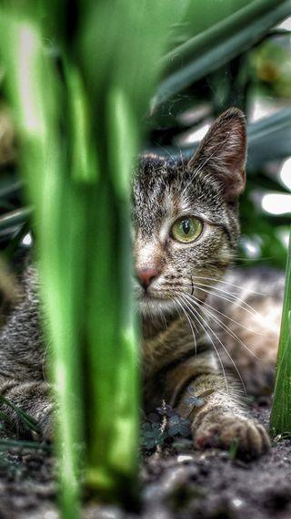 Обои на телефон милые, кошки, котята, коты, kot