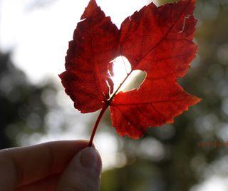 Обои на телефон рука, сердце, осень, любовь, листья, love