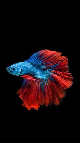 Обои на телефон рыба, красочные