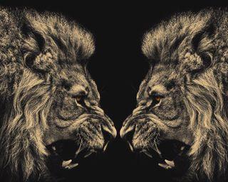 Обои на телефон картина, дикие, лев, животные, дикий