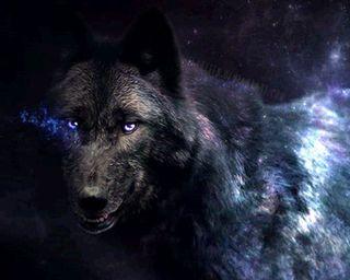 Обои на телефон черные, животные, волк