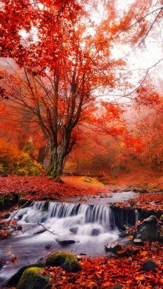 Обои на телефон река, природа, падает, осень, красые, autumn red