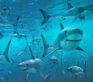Обои на телефон рыба, океан, море, животные, вода, акула