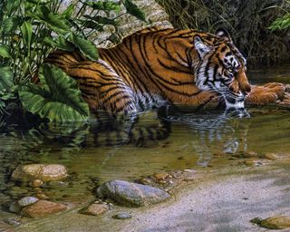 Обои на телефон джунгли, тигр, старые, лев, картина, животные, realistic, old tiger