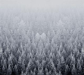 Обои на телефон снег, лес, зима, деревья, айфон, winter forest, mac, iphone, ios