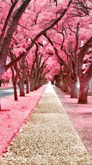 Обои на телефон романтика, розовые, любовь, дорога, tress, romantic road, love