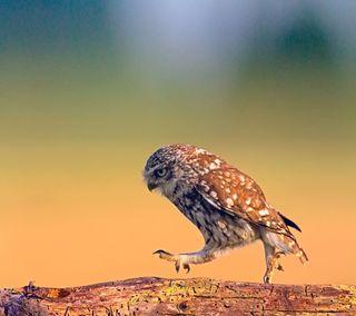 Обои на телефон ходячие, хищник, сова, птицы, прогулка, доска, дерево, prey