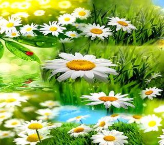 Обои на телефон маргаритка, цветы, природа, небо, листья, daisy hd, daises, bug