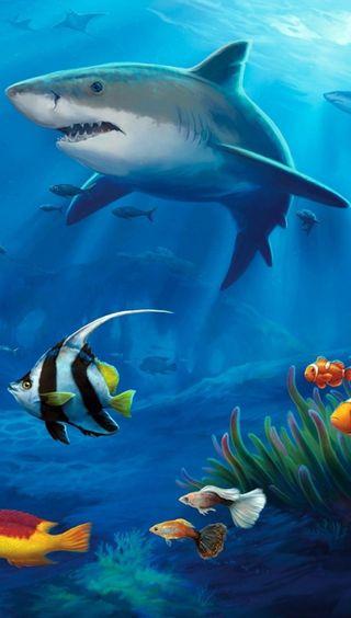 Обои на телефон подводные, акула, рыба