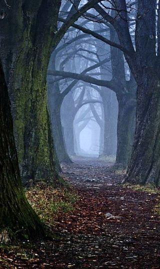 Обои на телефон ужасные, хэллоуин, тропа, страшные, путь, омг, ночь, лес, деревья, дерево