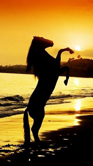 Обои на телефон солнечные, пляж, море, лошадь