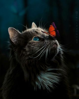 Обои на телефон черные, кошки, котята, коты, глаза, бабочки