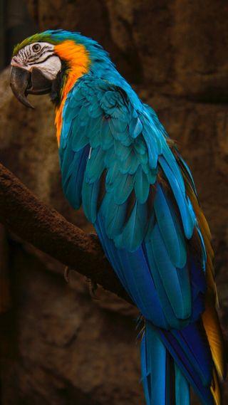 Обои на телефон попугай, попугаи, животные, 4k