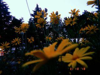 Обои на телефон эстетические, цветы, желтые, juliameth, full