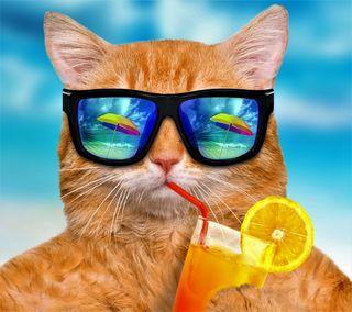 Обои на телефон пляж, отпуск, напиток, лето, кошки, zedgeld17