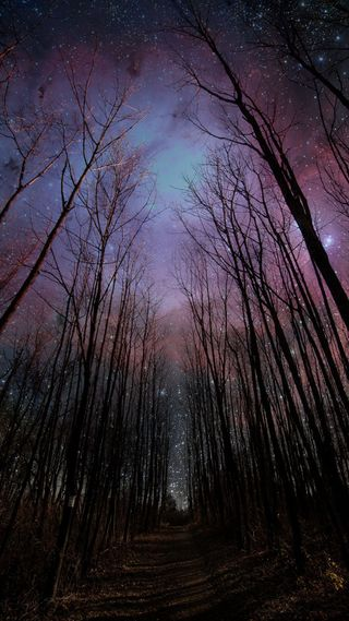 Обои на телефон яркие, ночь, небо, деревья, hd, 1920 1080x1920, 1520, 1080