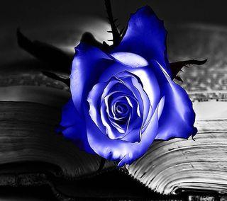 Обои на телефон книга, синие, розы, одиночество, другие, blue roses