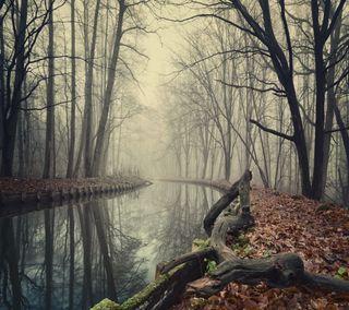 Обои на телефон туманные, река, природа, осень, лес