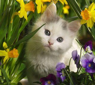 Обои на телефон питомцы, милые, кошки, животные