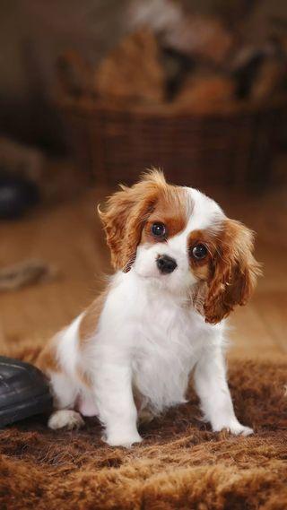 Обои на телефон barking, crush, cup, love, любовь, милые, желтые, собаки, щенки, чашка, волосы