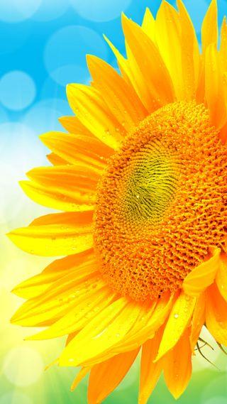 Обои на телефон подсолнухи, яркие, синие, лето, желтые