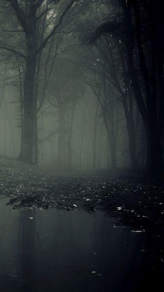 Обои на телефон путь, темные, ручей, озеро, лес, деревья, вода, dark forest