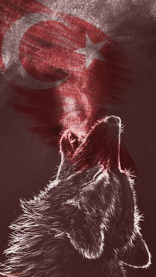 Обои на телефон турецкие, волк, ulu, direnis