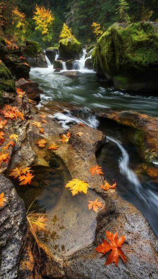 Обои на телефон река, природа, осень, листья, вода, maple