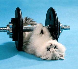 Обои на телефон спортзал, время, its gym time, 2160x1920