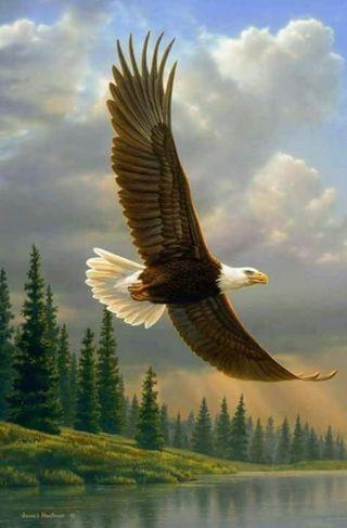 Обои на телефон страна, свобода, орел