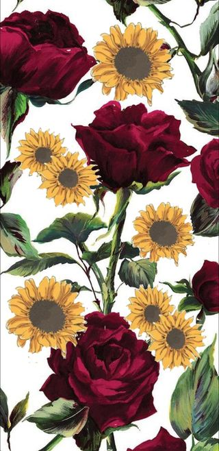 Обои на телефон подсолнухи, цветы, розы, sunflower and roses