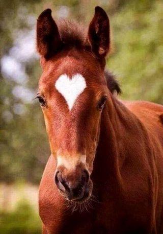 Обои на телефон лошадь, сердце, hearth