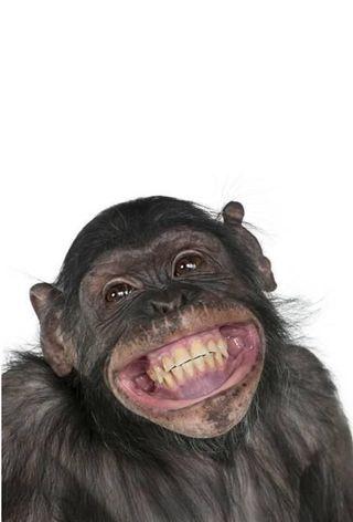 Обои на телефон обезьяны, fanny