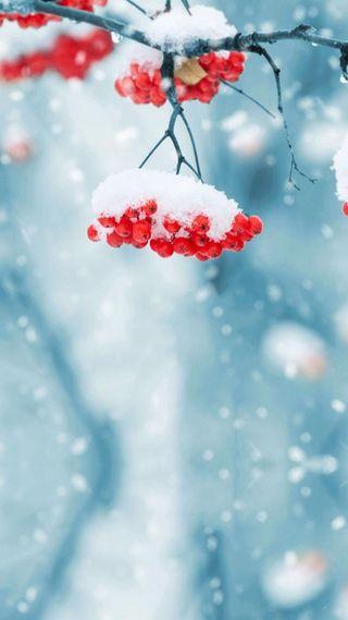 Обои на телефон холод, снег, рождество, красые, зима, дерево, ветка