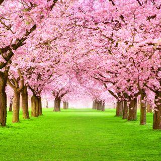 Обои на телефон трава, весна, прекрасные, парк, деревья