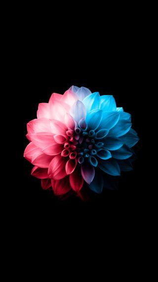 Обои на телефон лотус, цветы, цветок, телефон, синие, розовые, оригинальные, plus, hd