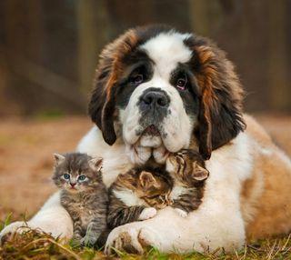 Обои на телефон маленький, собаки, прекрасные, коты, друзья, small cats, dog and small cats