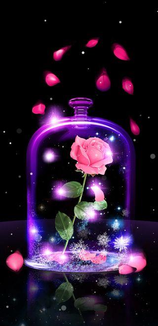 Обои на телефон rose petals, beauty or beast, розовые, фиолетовые, цветы, розы, красота, симпатичные, девчачие, сверкающие, лепестки, зверь