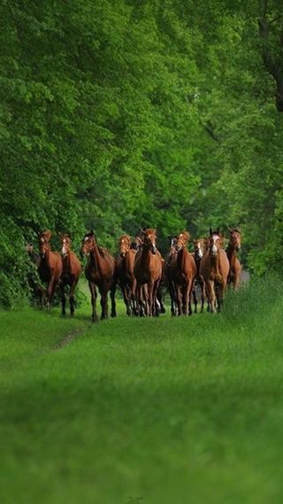 Обои на телефон лошади, природа