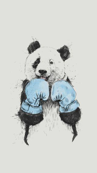 Обои на телефон медведи, плохой, панда, одиночество, медведь, бокс, boxer, bad