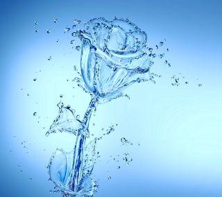 Обои на телефон капли, цветы, розы, вода, брызги, аква, aqua rose