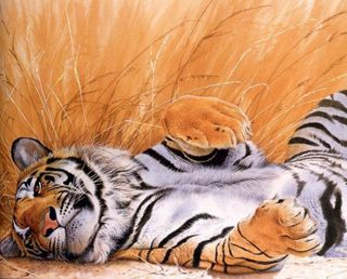 Обои на телефон тигр, приятные, животные