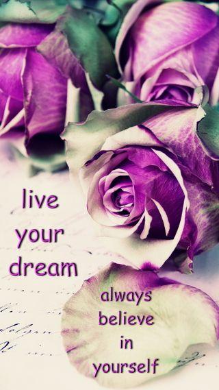 Обои на телефон цветы, фиолетовые, себя, розы, поговорка, всегда, live, belive