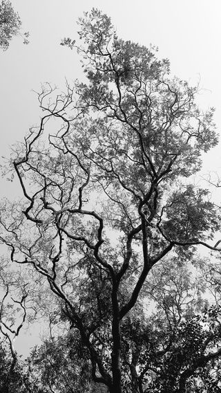 Обои на телефон джунгли, черные, дерево, белые