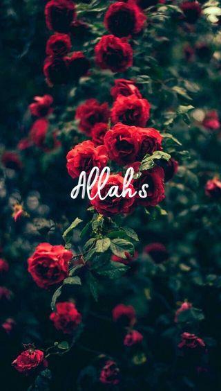 Обои на телефон слово, цветы, розы, мой, мир, красые, исламские, зеленые, аллах