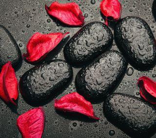 Обои на телефон лепестки, черные, стиль, красые, капли, камни