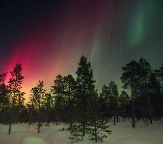 Обои на телефон удивительные, северный, природа, огни, небо, лес, lit, forest lights