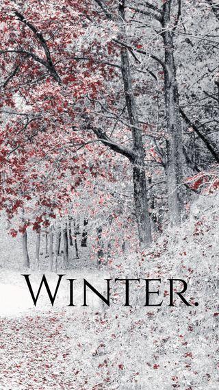 Обои на телефон слово, снег, сезон, поговорка, листья, лес, красые, зима, дерево, белые