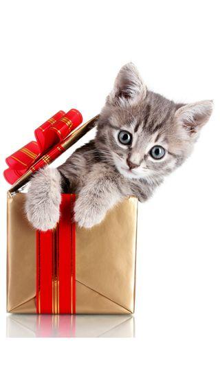 Обои на телефон коты, рождество, подарок, милые, кошки, котята, забавные